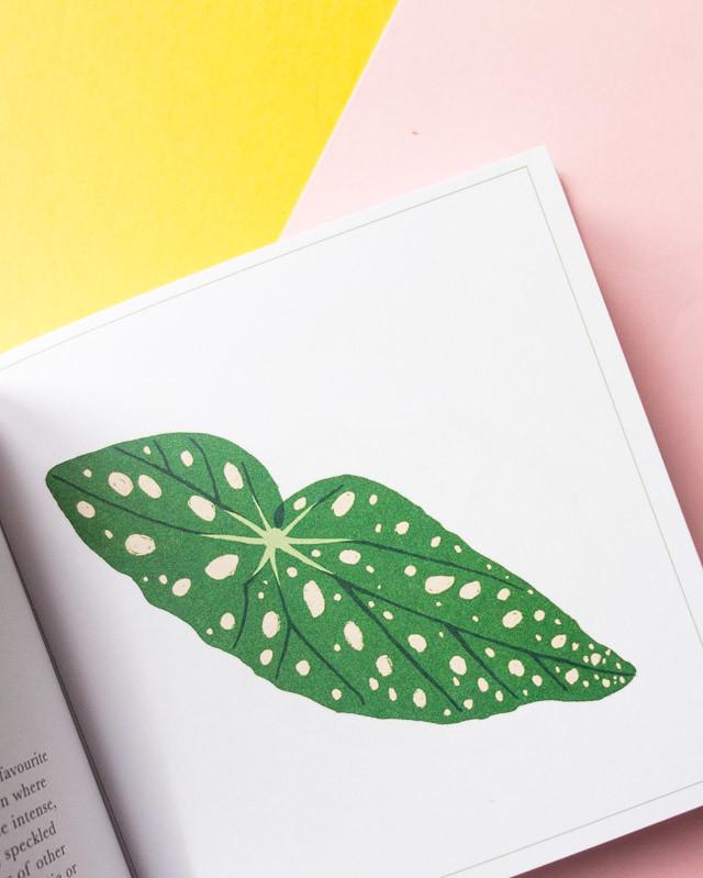 begonia leaf illustration
