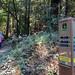 Wunderlich/Bear Gulch Trail - Madrone Trail Junction