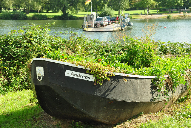 Ladenburg am Neckar Fähre Grüner Ring Waldpark Spazierweg Muschusente Warzenente ... Brigitte Stolle