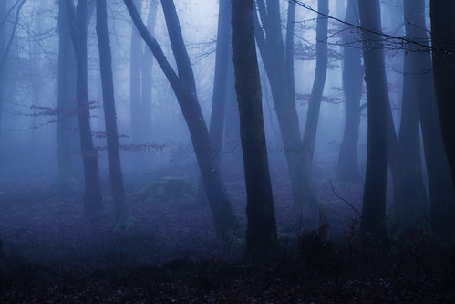 Cold Dark Dorset Wood | by Capturing The Elements