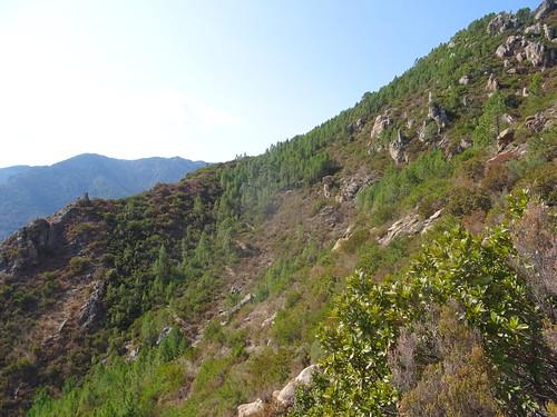 Construction de la trace vers la sapara : vue du chemin de Bocca di Ricu que l'on a quitté