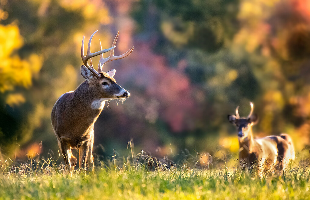 Photo of bucks by Reinhardt Sahmel
