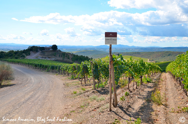 Vinhedo onde são colhidas as uvas sangiovese para a produção do Brunello Campo del Drago Castiglion del Bosco