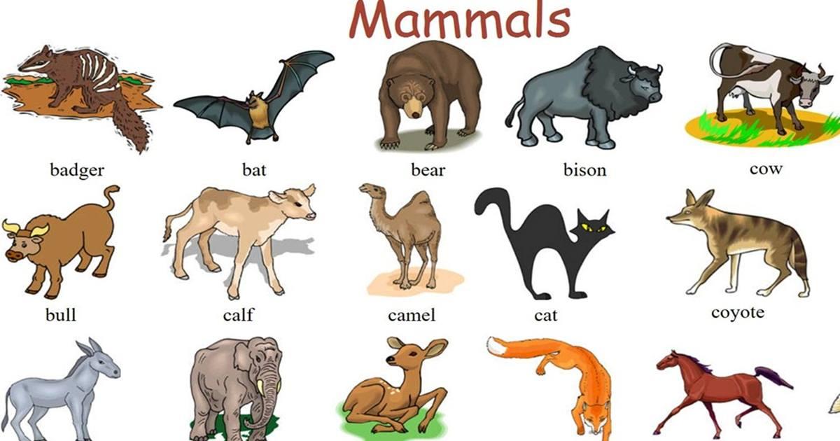 "Vocabulary: ""MAMMALS"" 5"