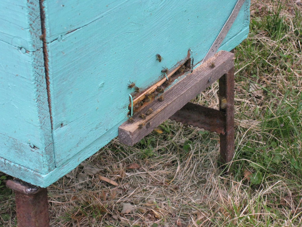 Пчелиные ульи