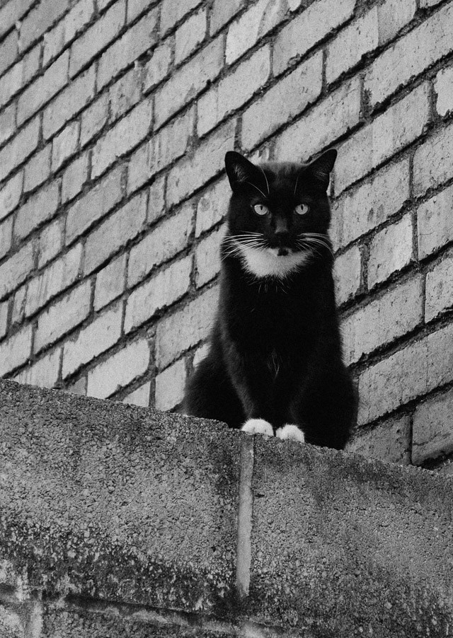 black and white cat on wall