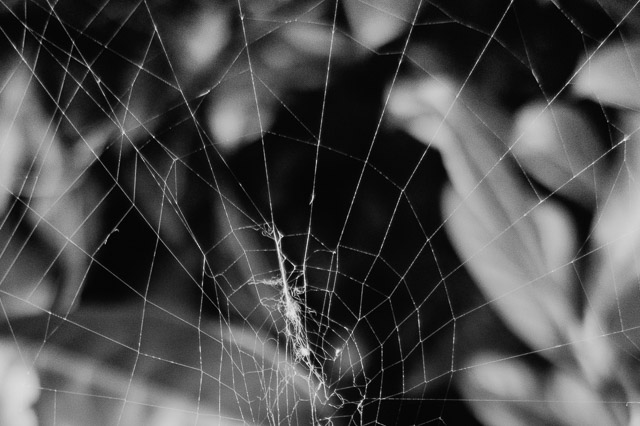 spiders web close up
