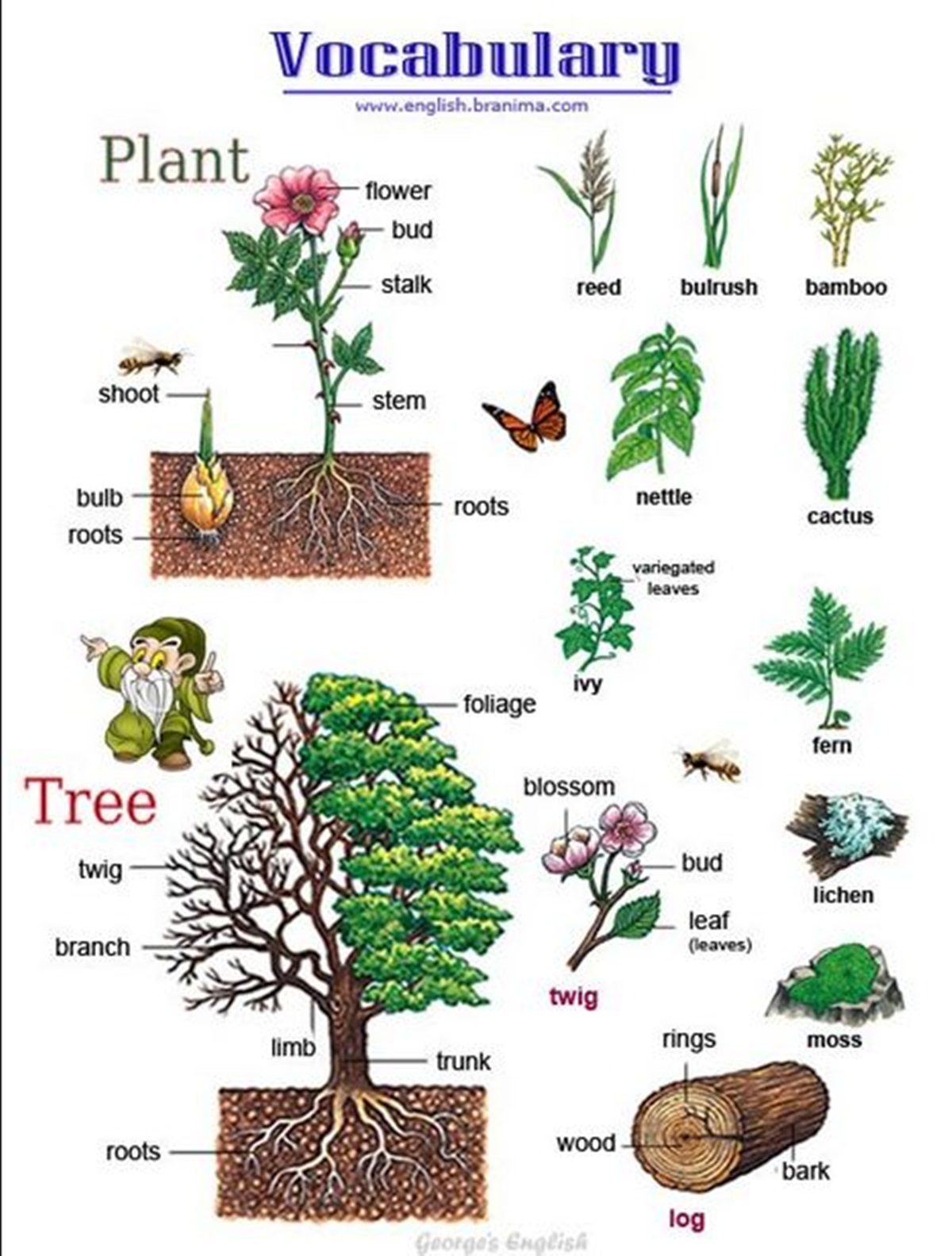 Vocabulary: PLANTS & TREES 3