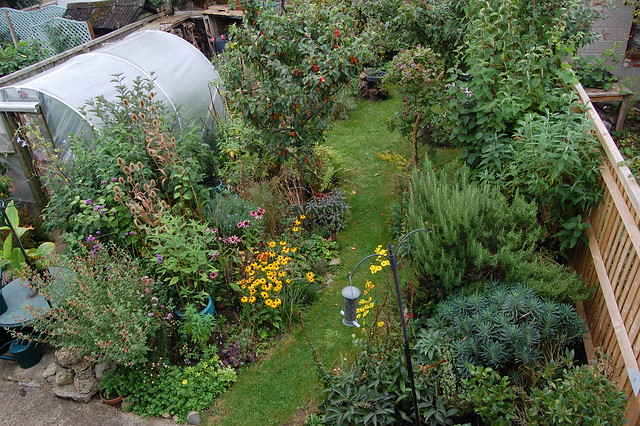 View of the back garden from an upstairs window