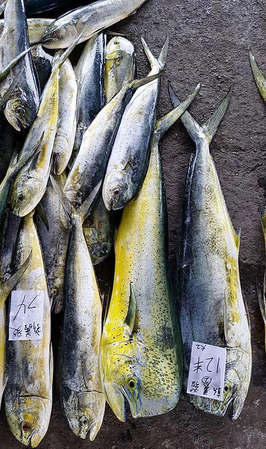 魚貨直接放在地上拍賣,不但使鮮度容易流失,也有食安衛生上的隱憂。如此不尊重生命的態度,已經是臺灣人難以改變的陋習。