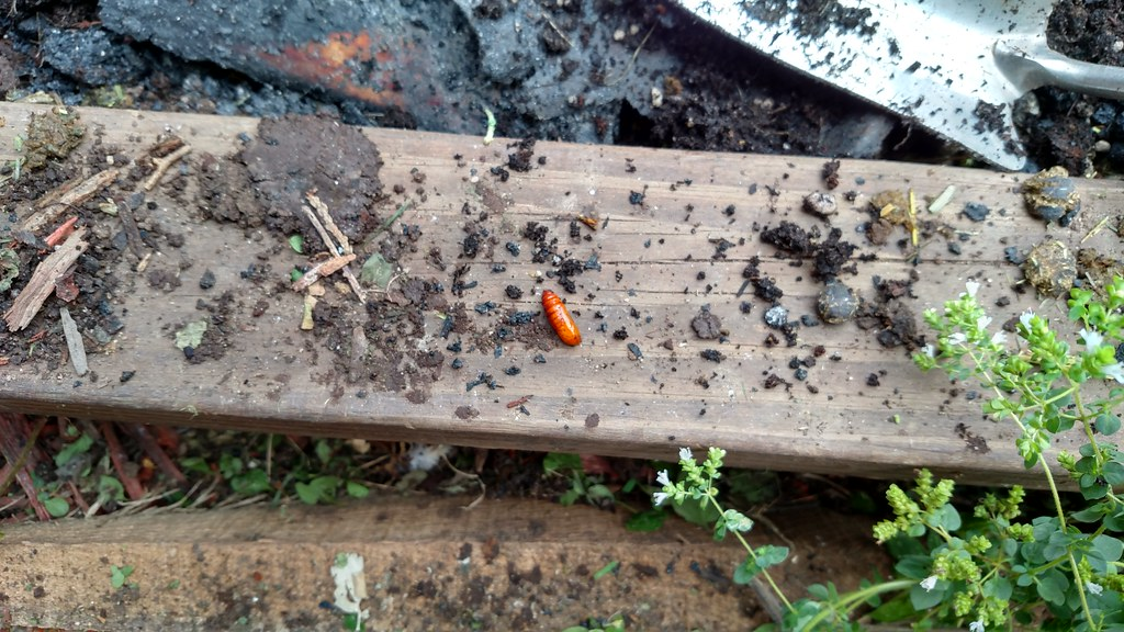 How to Make Compost from Rabbit Manure How to Make Compost from Rabbit Manure new foto