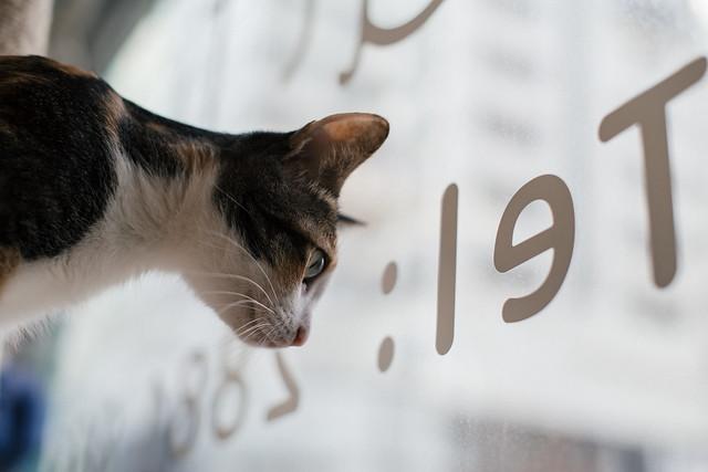 Pentax K1 CAT TUNE 貓咪試鏡