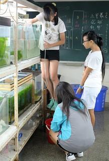 由高年級學生組成的「台灣原生魚類小天使」,是水生走廊不可或缺的力量。攝影/楊孟軒
