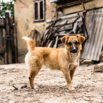 stray_dog_by_radu_galan