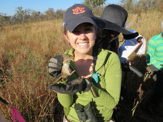 Hannah Gunter handling an African striped mouse in a field.