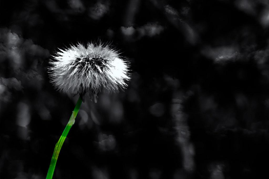 Straw of Life