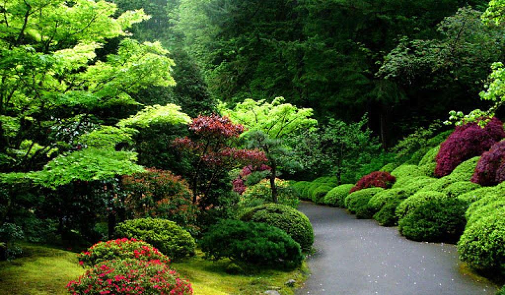 Gambar Pemandangan Hutan Terindah Via Blogger Ift Tt 2xmdc Flickr