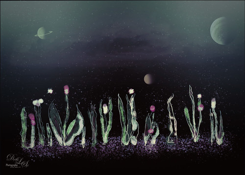 Digital Art image of flowers and planets