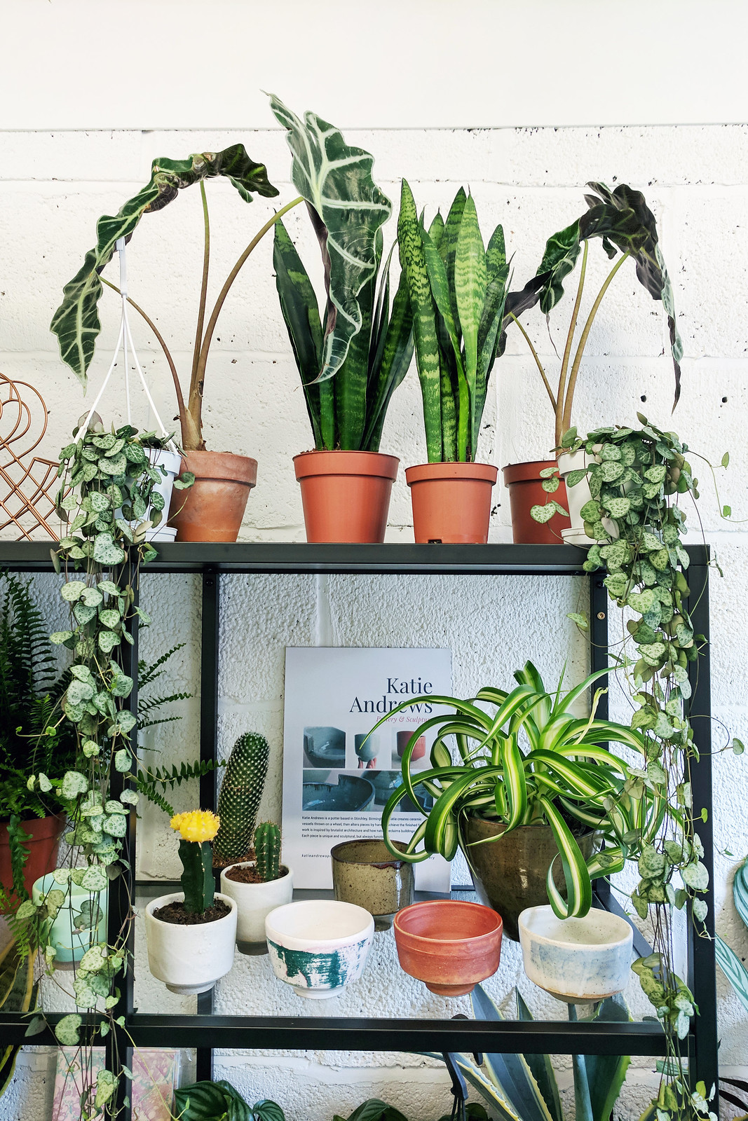 My Favourite Places To Buy Plants