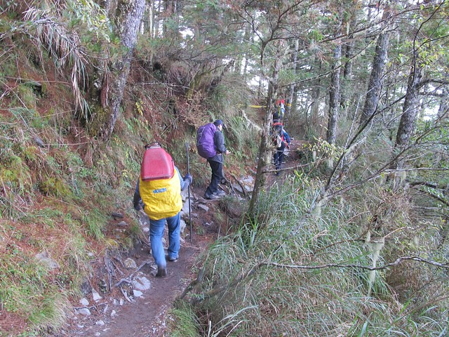 103年11月高山手作步道工項訓練@嘉明湖步道。攝影:陳理德