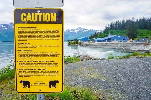 ¡Precaución osos!