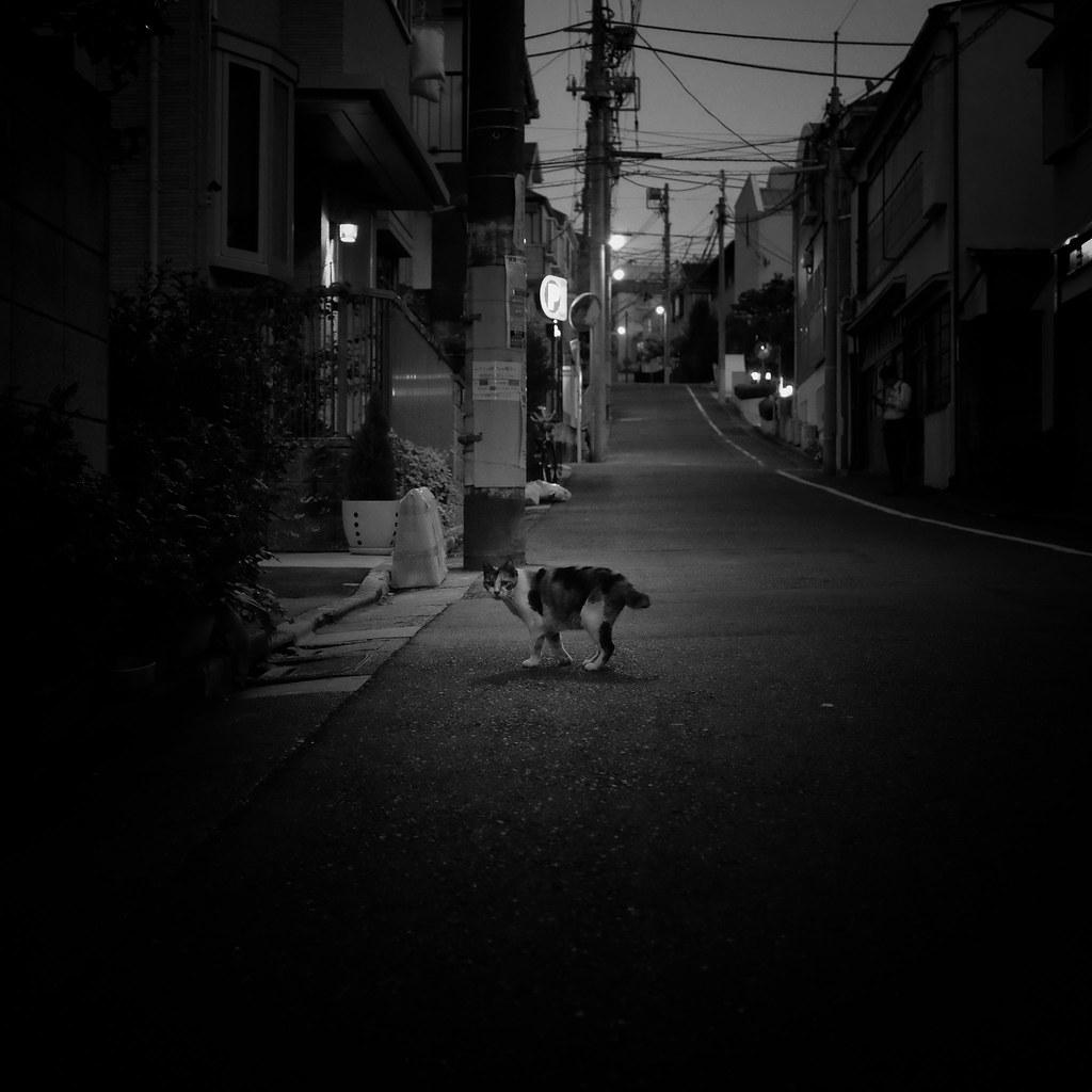 night walk/夜の散歩 | by s_inagaki