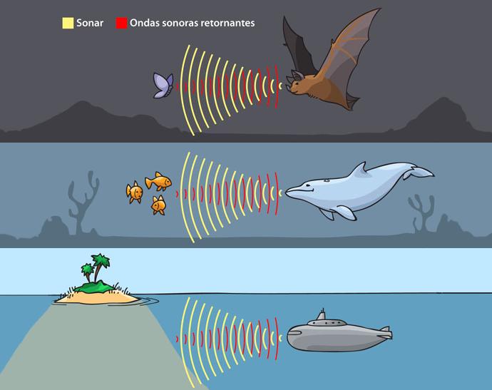 """La """"visión"""" de murciélagos, cetáceos y submarinos se basa en la ecolocalización"""