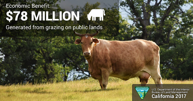 Economic Benefit:  $78 million generated from graing on public lands.  A cow stands in an area with dry grass and trees.