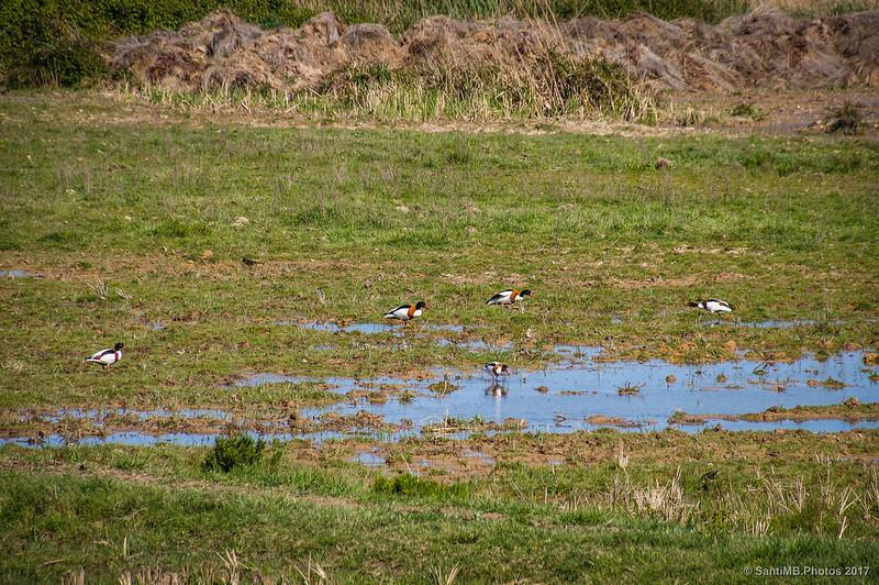 Tarros blancos en el Delta del Llobregat