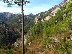 Bocca di Ricu : le haut du Finicione et le Castedducciu