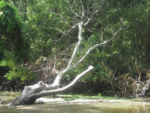 An Inconvenient Tree