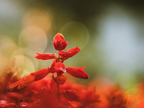 Lady in red | by A_Peach