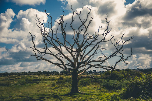 The Dead Tree | by Dan Redding Video