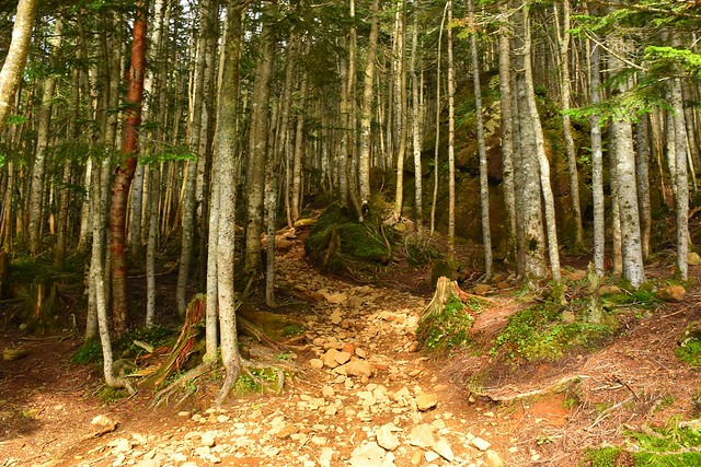 地蔵尾根の樹林帯