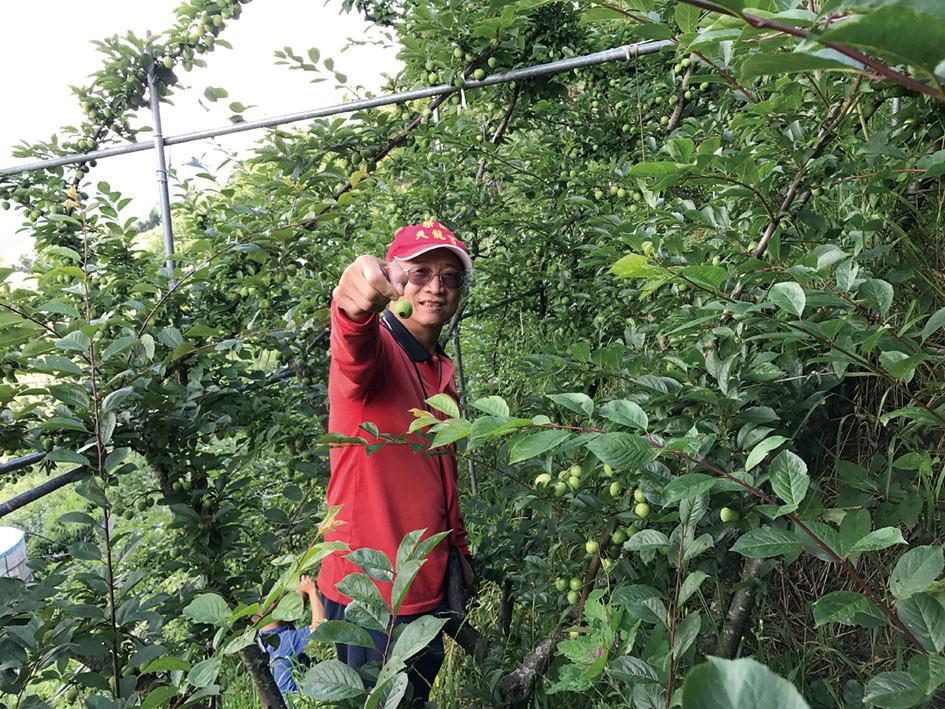 喻嘉璧隨手摘下一顆被蟲吃了一口的西瓜李。(攝影/邱妍菩)