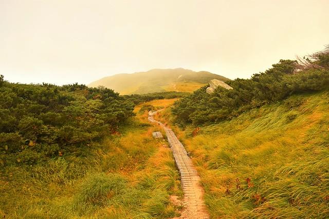 大日岳の木道と草紅葉