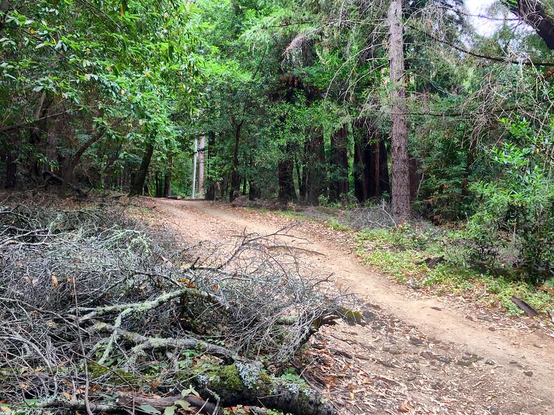 Crystal Springs Trail