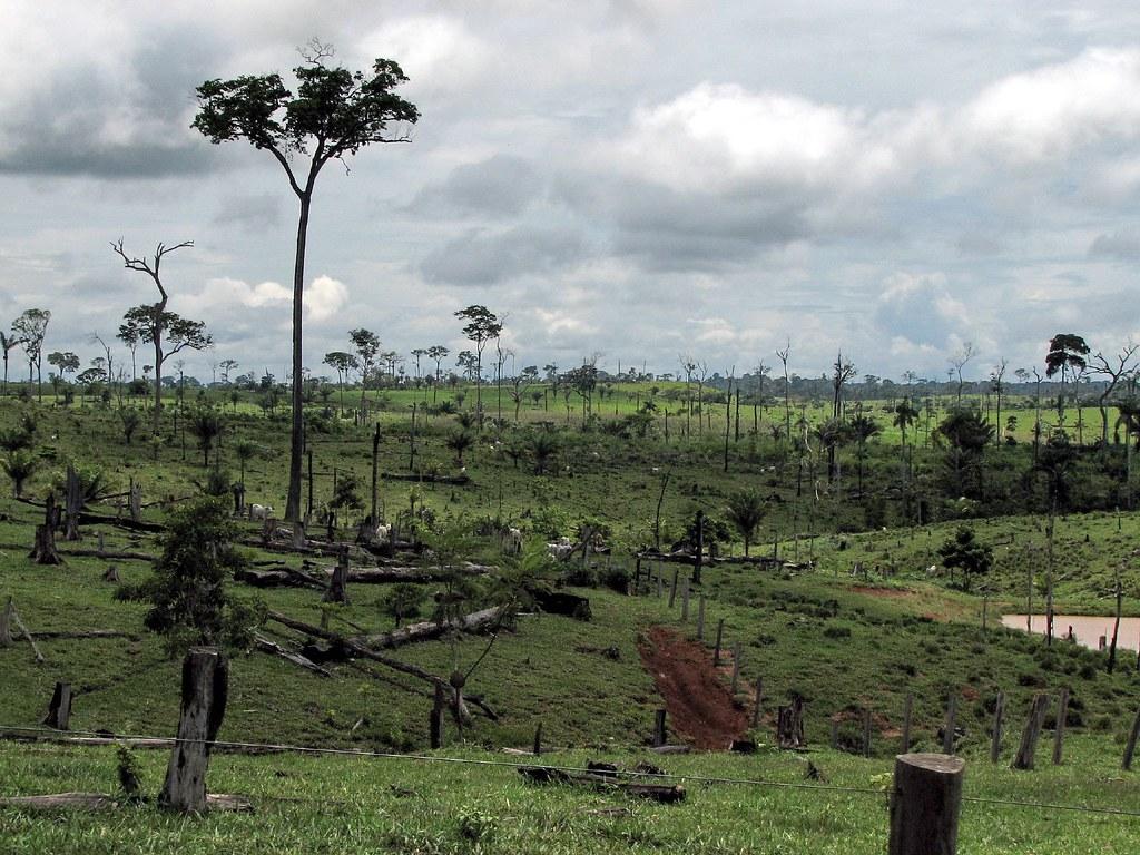 巴西亞馬遜地區的森林砍伐。圖片來源:Lou Gold(CC BY-NC 2.0)