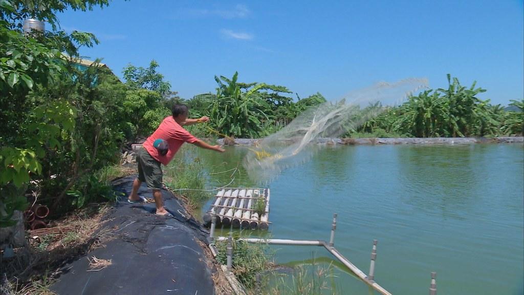 923-1-12 陳嘉和從事泰國蝦養殖,他擔心依賴乾淨水源的蝦池,會因此受到影響。