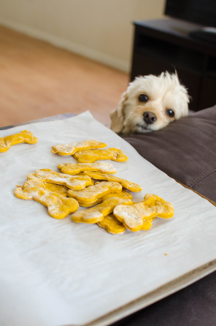 Pumpkin Carrot Oat Dog Treats