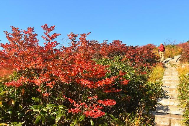 苗場山登山(祓川コース) 紅葉と木道