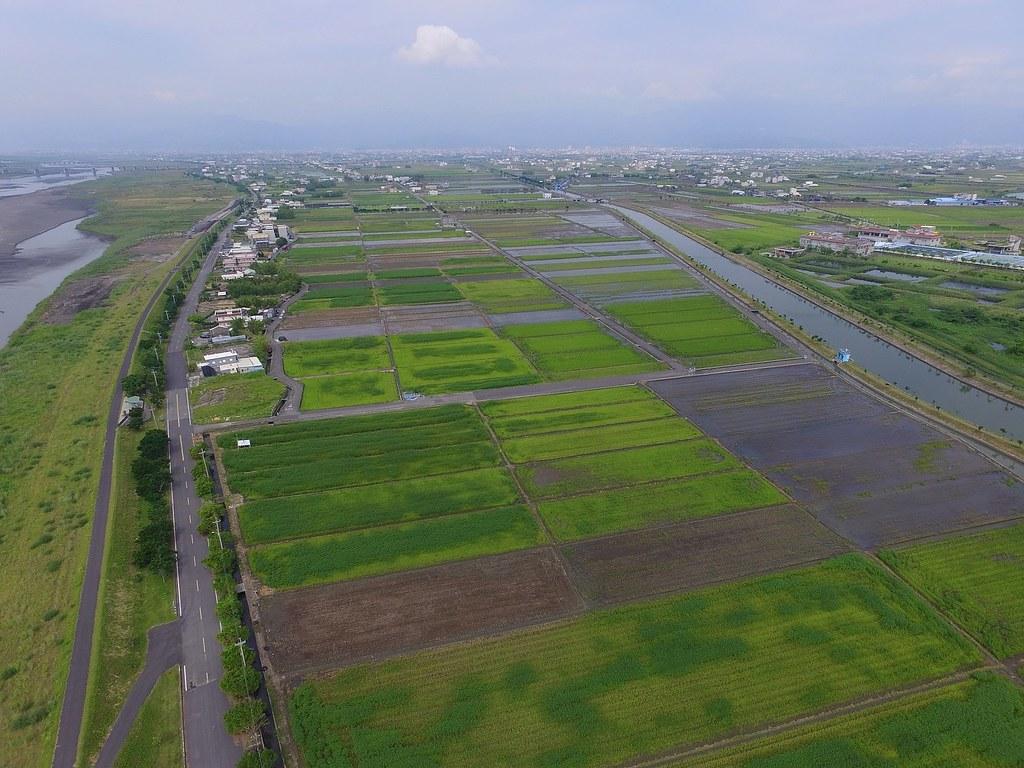 新南大面積的水稻田。圖片來源:林哲安