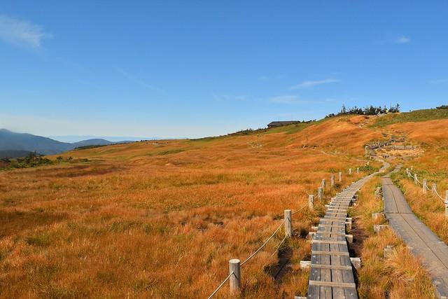 秋の苗場山 草紅葉広がる山頂