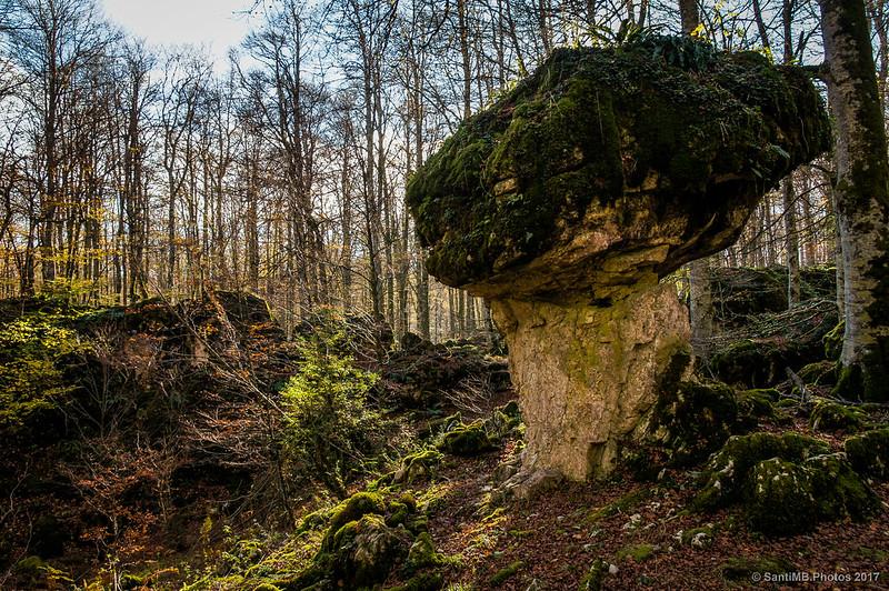 Gran Boletus en el Bosque Encantado de Urbasa