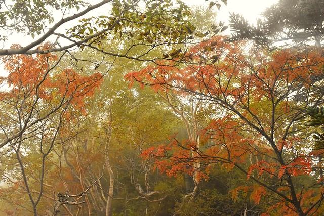 南アルプス・早川尾根の紅葉