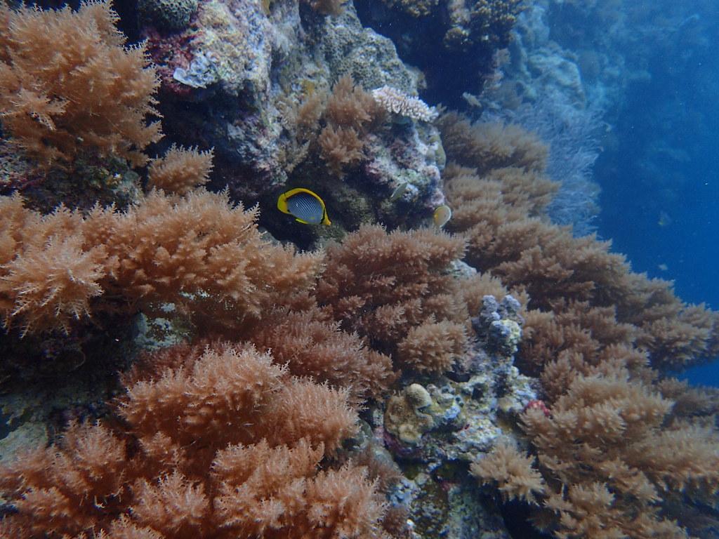 6 第十三屆締約方大會的重要議題之一是指認「具有重要生態或生物意義的海洋區域」