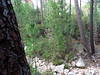 Arrivée au ruisseau de Pinu Neru : en face, la suite du chemin vers la brèche