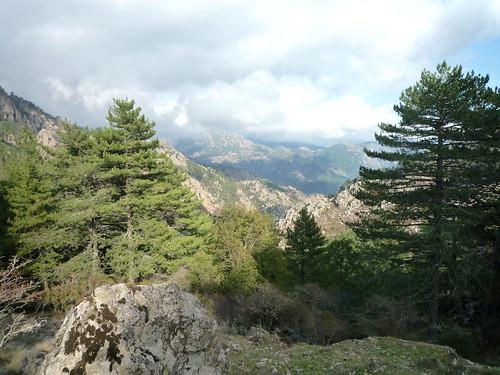 Vue de la vallée du Finicione depuis les pentes du versant NE de Bocca di Castedducciu