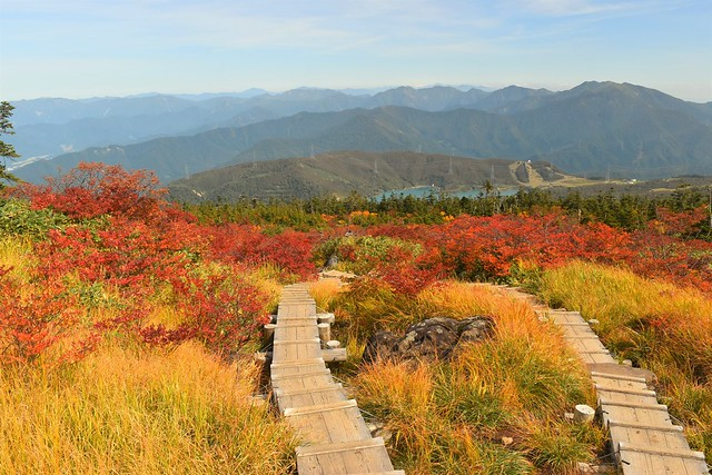 苗場山 上ノ芝の紅葉風景