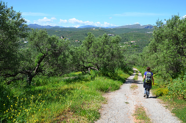 Walking between olive groves, Crete